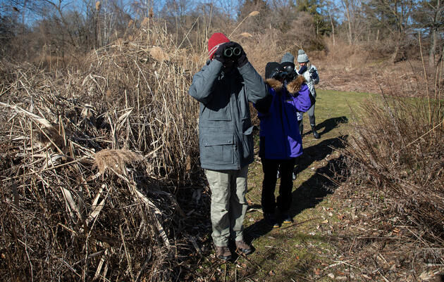 What is Winter Bird Counting?