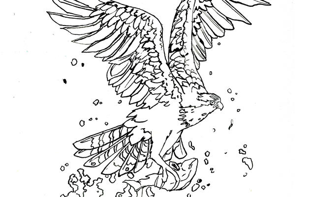 Osprey Coloring Page