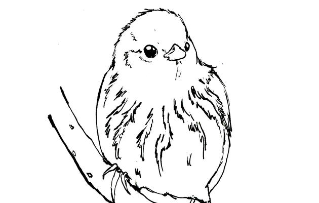 Yellow Warbler Coloring Page