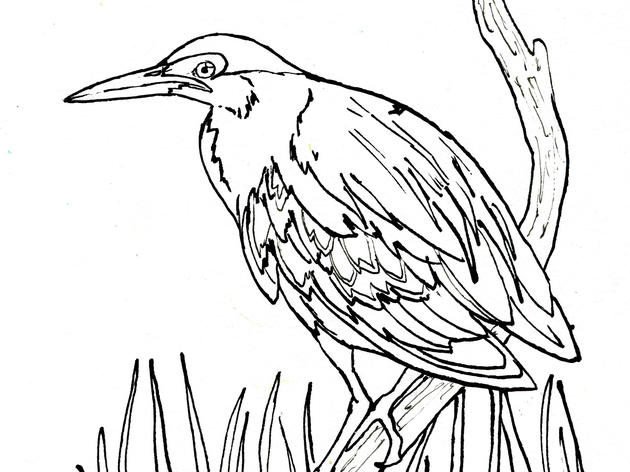 Green Heron Coloring Page