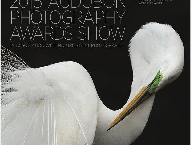 Audubon Photography Exhibit in Southbury